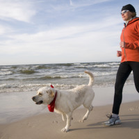 Dog Owner Liability for Injuries